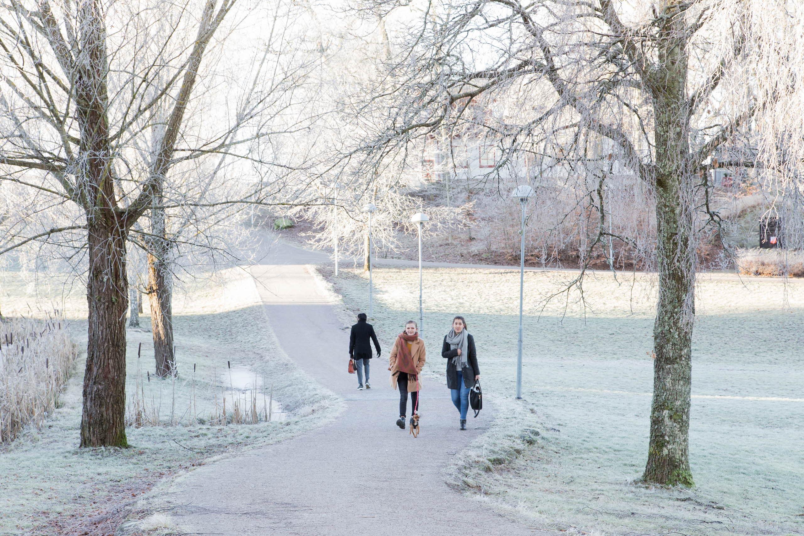 Winter day at at Linnaeus University